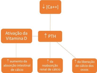 Metabolismo cálcio